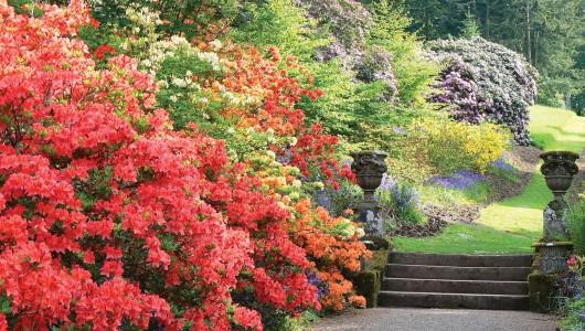 Dawyck  Gardens